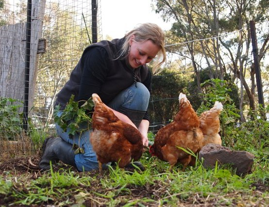 The chooks love to help!