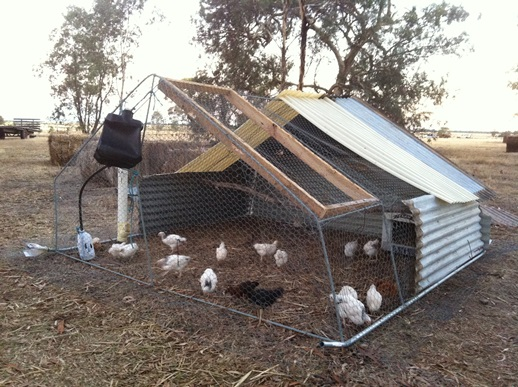 Chook house at White Stone Farm