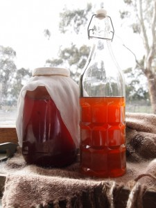 Kombucha at White Stone Farm