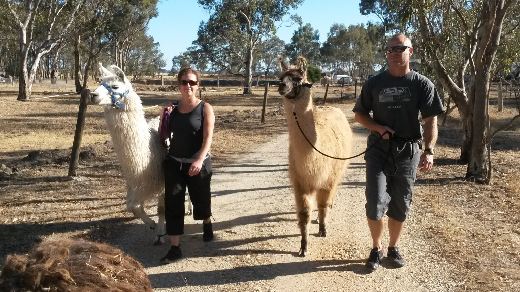 Heading out on a llama trek