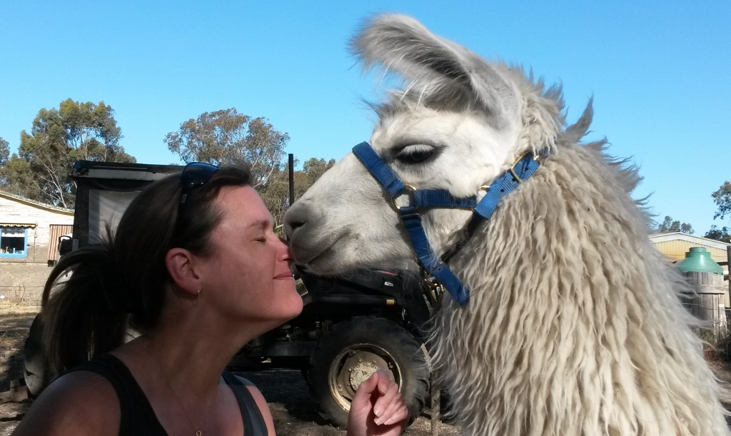 Llama kisses with Yuki and Karen