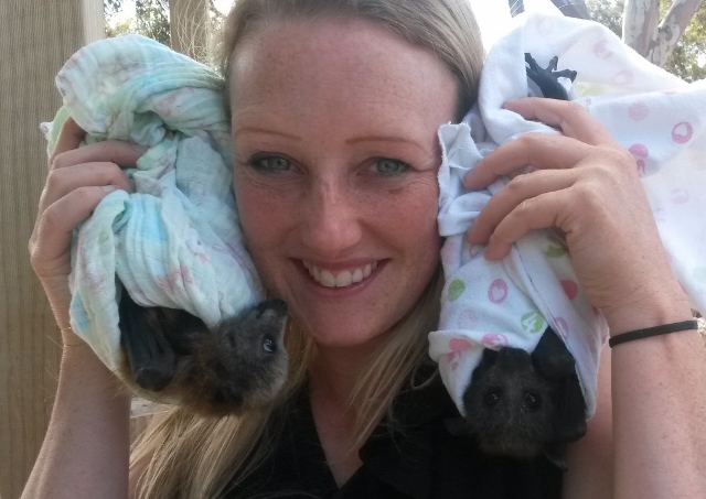 Prue and baby bats